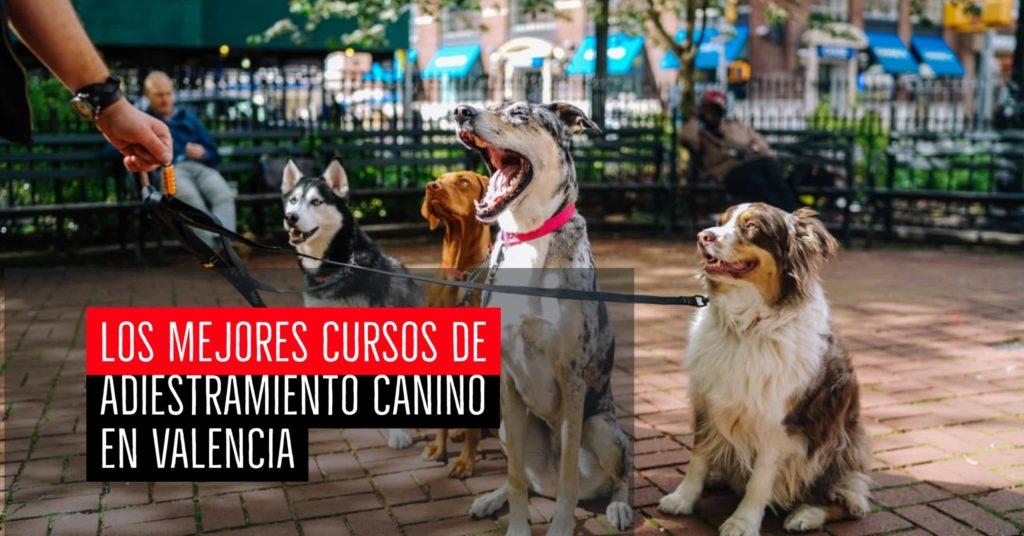 Los mejores cursos de adiestramiento canino en Valencia